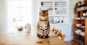 Le este dor pisicilor de stăpânii lor? Semne care indică faptul că pisica îți simte lipsa