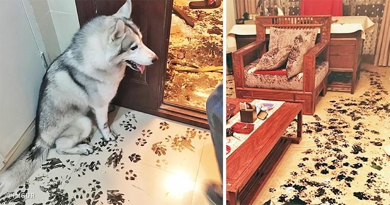 18 animale fără rușine care și-au făcut proprietarii să râdă cu lacrimi