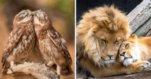 20 de Cupluri de Animale care Dovedesc că Dragostea Există