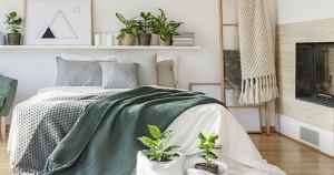 Plante recomandate în dormitor - 5 plante care te ajută să ai un somn liniștit