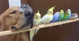 Animale care dovedesc că prietenia depășește toate diferențele