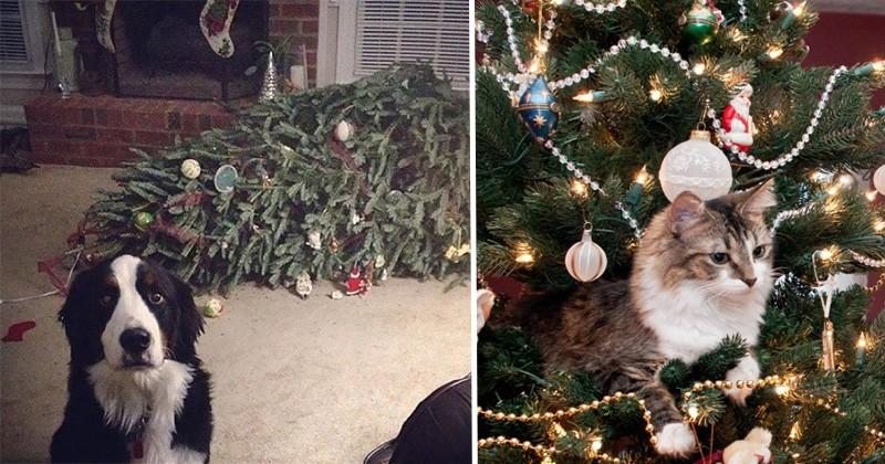 21 De Ocazii Când Animalele s-au Purtat ca un Grinch Când Au Văzut un Brad de Crăciun