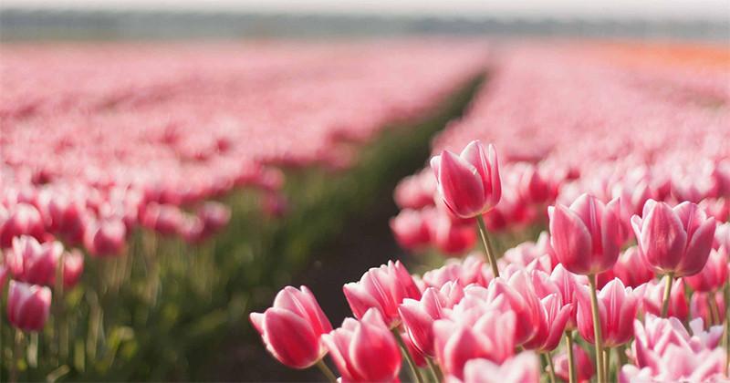 Știați că…? 20 de curiozități despre flori