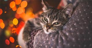 Felinoterapia: oare pisicile pot fi terapeuți adevărați? Iată ce spun experții.