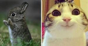 19 animale care sunt atât de adorabile, încât merită să câștige un Oscar