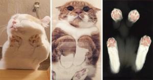 20 De Fotografii Care Dovedesc că Pisicile Arată Drăguț din Orice Unghi