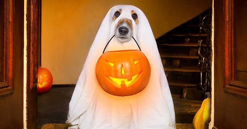 13 câini adorabili în costum de fantomă care aproape ne-au speriat