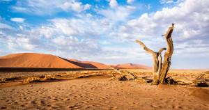 Cele mai fascinante curiozități despre deșert