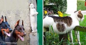 31 Imagini care Dovedesc că Pisicile Sunt Niște Creaturi Hilare
